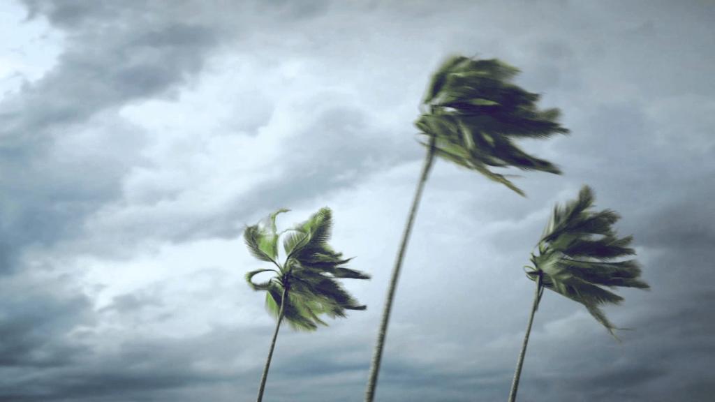 Regnerischer Himmel, Palmen biegen sich im stürmischen Wind